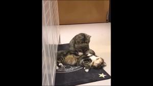 Kocie spa