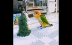Tańcząca choinka
