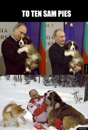 Dyktator i pies