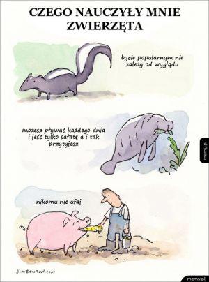 Nauka od zwierząt