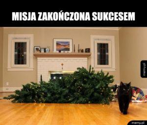 Choinka i kot