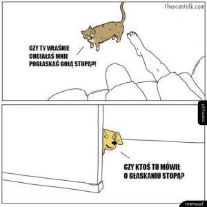 Różnica między kotem a psem