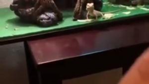Machająca jaszczurka