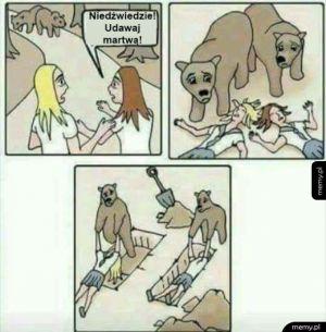 Biedne niedźwiadki
