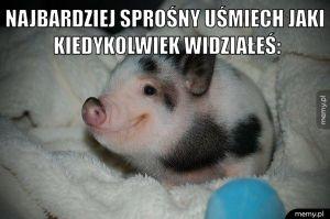 Świńskie sprawy. :)