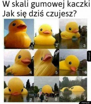Którą kaczką jesteś