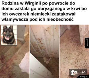 Waleczny pies