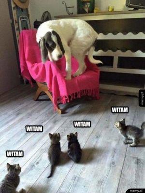 Brutalny atak na psa