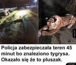 Straszny tygrys