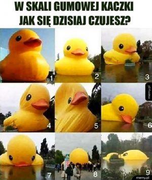 Którą gumową kaczką dzisiaj jesteś?