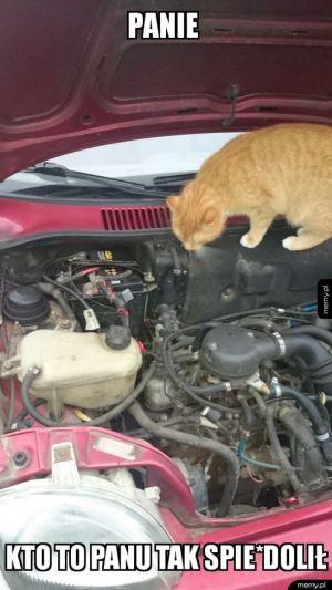 Kot Mechanik