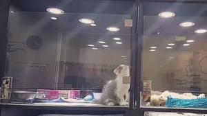 Kotek poczuł się samotny