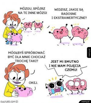 Mój mózg