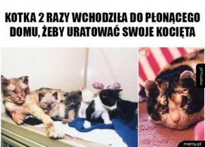 Uratowane kocięta