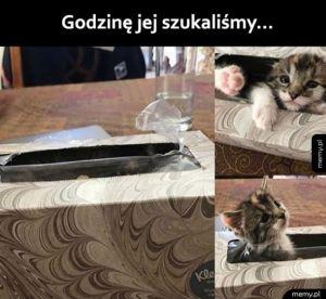 Kotek się schował