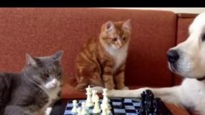 Niespodziewany ruch kota