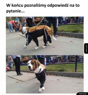 Gdyby psy nosiły spodnie...?