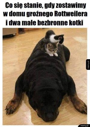 Pies i kotki