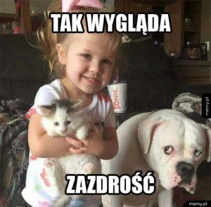 Psia zazdrość