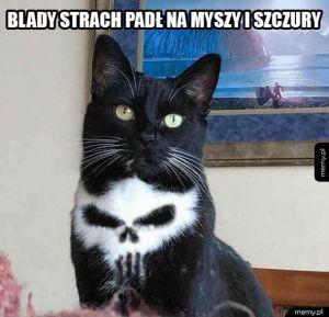 Kot Punisher