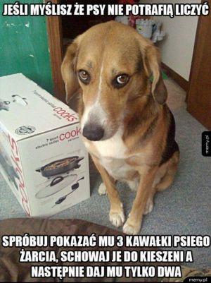 Psia matematyka