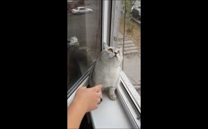Kot.exe nie odpowiada