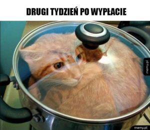 Kocia zupa