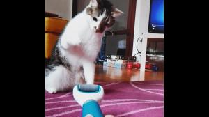 Kot vs elektryczny pilnik do stóp
