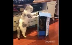 Ooo.. jakie fajne pudełko