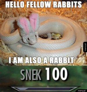 Witajcie bracia króliki