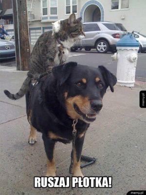 Koteł, szczur i pies