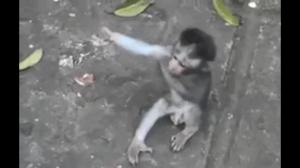 Małpka spragniona czułości