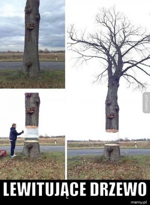 Lewitujące drzewo