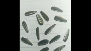 Zgadnij, które nasiona są prawdziwe