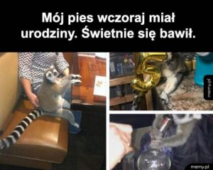 Psie party
