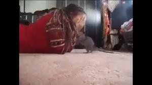 Dziewczyna bawi się z pieskiem
