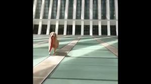 Idziemy  na spacer!