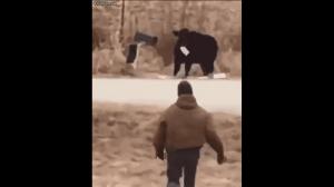 Krowa kradnie listy