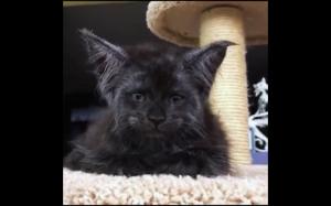 Nietypowy kotek