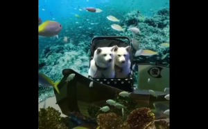 Pod wodą.