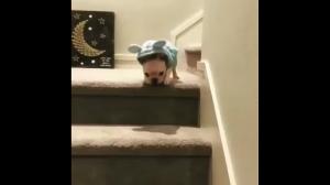 Uroczy szczeniak schodzi po schodach