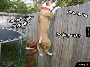 Psze pana.