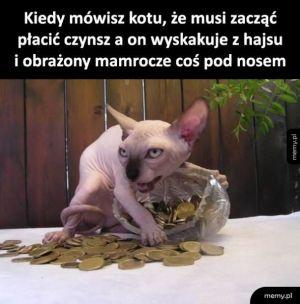 Sorry kot takie życie