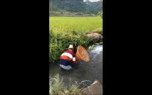 łapanie ryb
