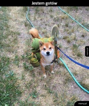 gotowy na spacer!