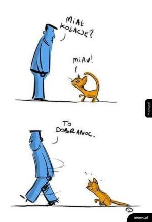 Jak postępować z kotem