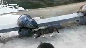Temperamentny kot