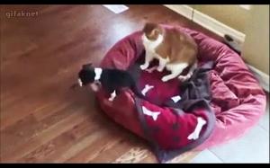 Poskarżył się mamie