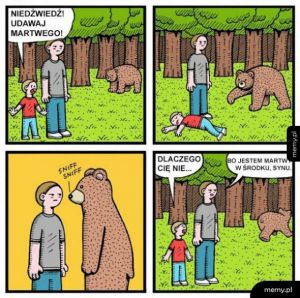 Postrach niedźwiedzi