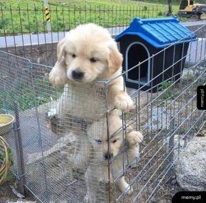 Wyciekły zdjęcia z nowego sezonu Prison Break